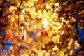 Картинка осень, ветки, природа, блики, листва