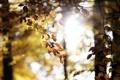 Картинка листья, солнце, деревья