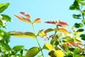 Картинка листья, макро, ветки, природа, дерево, листок, весна