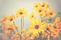 Картинка цветы, стебли, лепестки, боке, желтые цветы