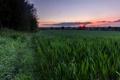 Картинка небо, трава, закат, природа