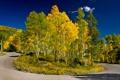 Картинка лес, осень, деревья, дорога, поворот, небо