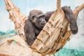 Картинка обезьяна, зоопарк, взгляд