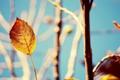 Картинка осень, ветки, 1920x1200, стебель, размытость, дерево, растение