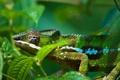 Картинка ящерица, рептилия, гекон