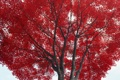 Картинка осень, листья, дерево