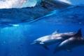 Картинка море, волна, дельфины