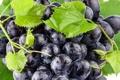 Картинка листья, капли, синий, роса, ягоды, berry, виноград