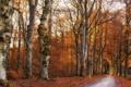 Картинка дорога, осень, лес, природа