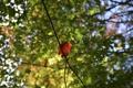 Картинка осень, листья, деревья, размытость, марко