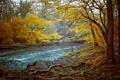 Картинка осень, лес, деревья, корни, река