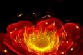 Картинка цветок, свет, линии, пламя, лепестки, полумрак