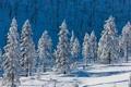 Картинка природа, горы, снег, деревья