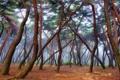 Картинка лес, деревья, природа, хвоя