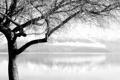 Картинка вода, деревья, ветки, фото, дерево, пейзажи, красивые обои для рабочего стола