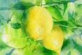 Картинка фон, лимон, картина, акварель