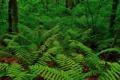 Картинка лес, листья, деревья, заросли