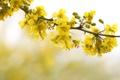 Картинка весна, дерево, ветка, цветы