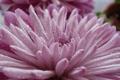 Картинка капли, макро, цветы, природа, красота
