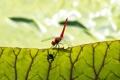 Картинка лист, стрекоза, лягушонок