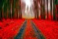 Картинка дорога, осень, лес, листья, деревья, парк, аллея