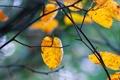Картинка осень, листья, ветки, дерево