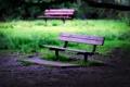 Картинка трава, лавочка, лавочки, зелень, настроение, скамейки, скамья
