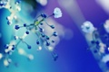 Картинка цвета, макро, цветы, фото, стебли, обои, растения