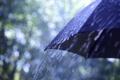Картинка макро, зонтик, дождь, капли. погода
