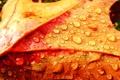 Картинка капли, осень, colorful leaf and drops, лист