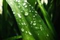 Картинка листья, вода, капли, макро, цветы