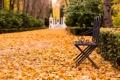 Картинка листья, деревья, парк, сад, дорожка, скамья