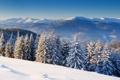 Картинка зима, снег, пейзаж, горы, природа, фото, ель