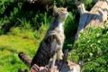 Картинка кошка, лето, трава, кот, кошак, лапка