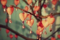 Картинка цветы, веточка, фон, widescreen, обои, сердце, ветка