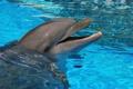 Картинка вода, дельфин, млекопитающее