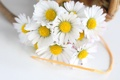 Картинка цветы, ромашки, лента, flowers, chamomile, tape