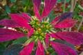 Картинка растение, листья, природа, цвет