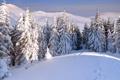 Картинка зима, лес, снег, горы, следы, сугробы, ёлки