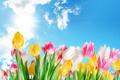 Картинка тюльпаны, розовые, небо, солнце, весна, желтые