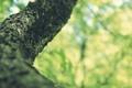 Картинка весна, кора, лето, деревья, макро обои, macro, свет