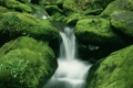Картинка камни, ручей, поток, лес, вода, стремнина, мох