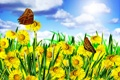 Картинка поле, небо, бабочка, весна, одуванчики, цветение, blossom