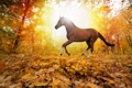 Картинка forest, horses in fall leaves, yellows