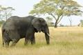 Картинка слон, Африка, сафари