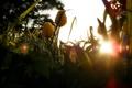 Картинка зелень, трава, листья, солнце, лучи, свет, цветы