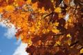 Картинка небо, ветки, Осень, листики