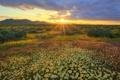 Картинка поле, солнце, лучи, цветы, рассвет