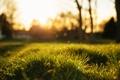 Картинка трава, блики, размытость