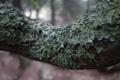 Картинка мох, кора, деревяшка